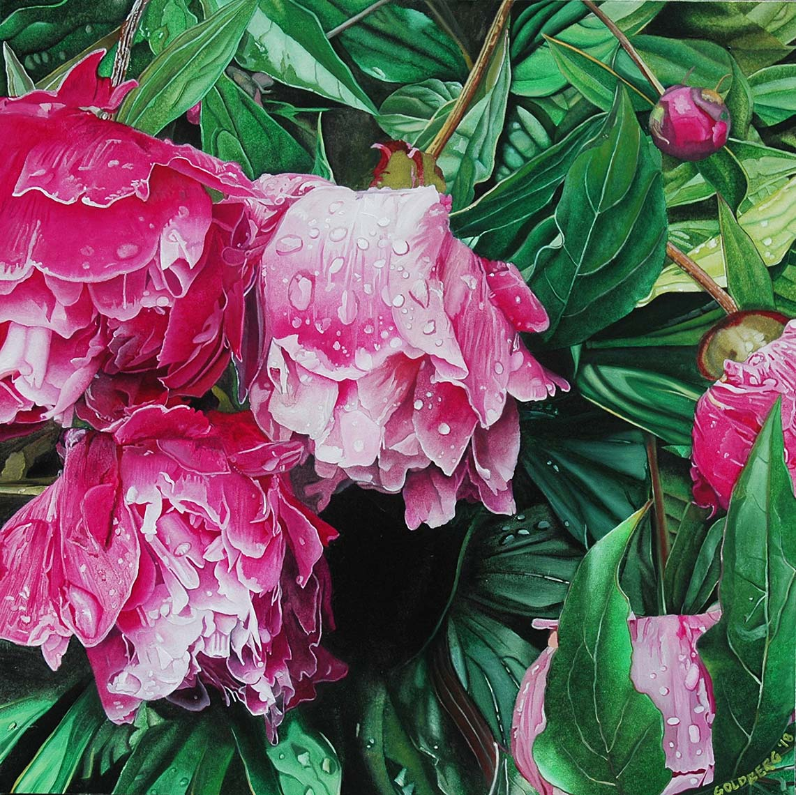 Peonies-36x36-oil-on-canvas-2018